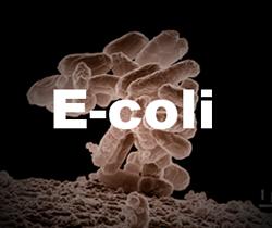 Water Testing Bacteria Connecticut E. coli  coiform